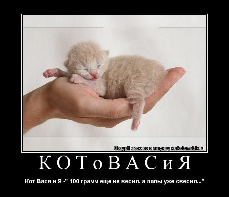 """Котоматрица: КОТоВАСиЯ Кот Вася и Я -"""" 100 грамм еще не весил, а лапы уже свесил..."""""""