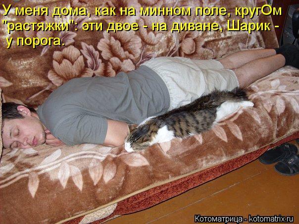 """Котоматрица: У меня дома, как на минном поле, кругОм """"растяжки"""": эти двое - на диване, Шарик -  у порога."""