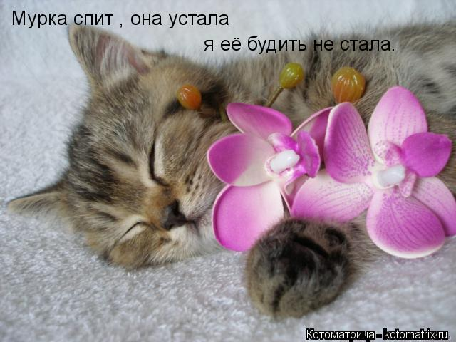 Котоматрица: Мурка спит , она устала  я её будить не стала.