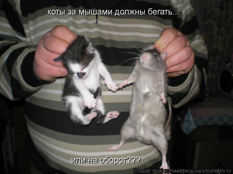 Котоматрица: коты за мышами должны бегать... или на оборот???