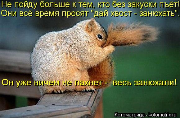 """Котоматрица: Не пойду больше к тем, кто без закуски пъёт!  Они всё время просят """"дай хвост - занюхать""""...  Он уже ничем не пахнет -  весь занюхали!"""