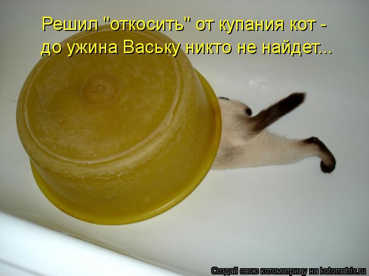 """Котоматрица: Решил """"откосить"""" от купания кот -  до ужина Ваську никто не найдет..."""