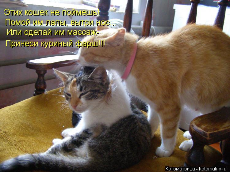 кошка делает массаж лапками что это значит вопрос, когда
