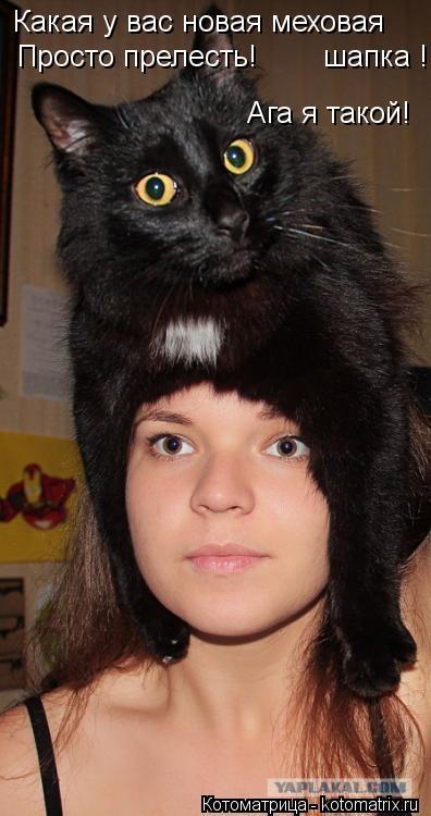 Котоматрица: Какая у вас новая меховая шапка ! Просто прелесть! Ага я такой!