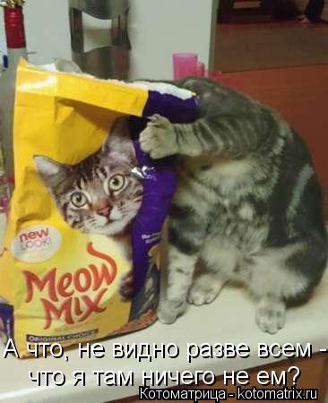 Котоматрица: А что, не видно разве всем - что я там ничего не ем?