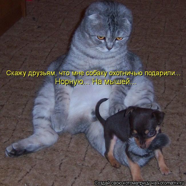 Котоматрица: Скажу друзьям, что мне собаку охотничью подарили... Норную... На мышей...