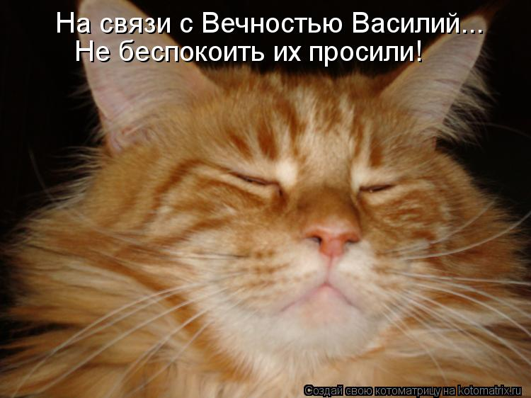 Котоматрица: На связи с Вечностью Василий... Не беспокоить их просили!