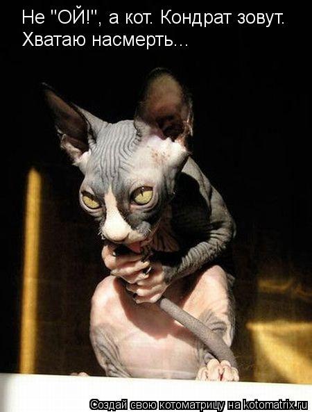 """Котоматрица: Не """"ОЙ!"""", а кот. Кондрат зовут. Хватаю насмерть..."""