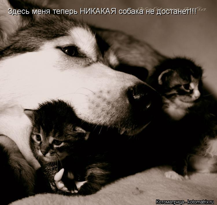 Котоматрица: Здесь меня теперь НИКАКАЯ собака не достанет!!!