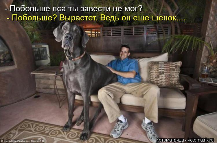 Котоматрица: - Побольше пса ты завести не мог?  - Побольше? Вырастет. Ведь он еще щенок....
