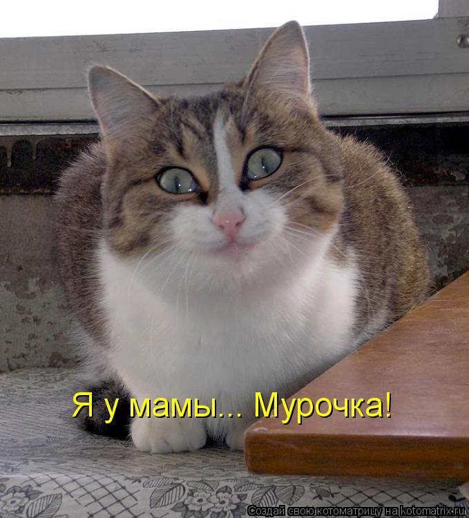 Котоматрица: Я у мамы... Мурочка!