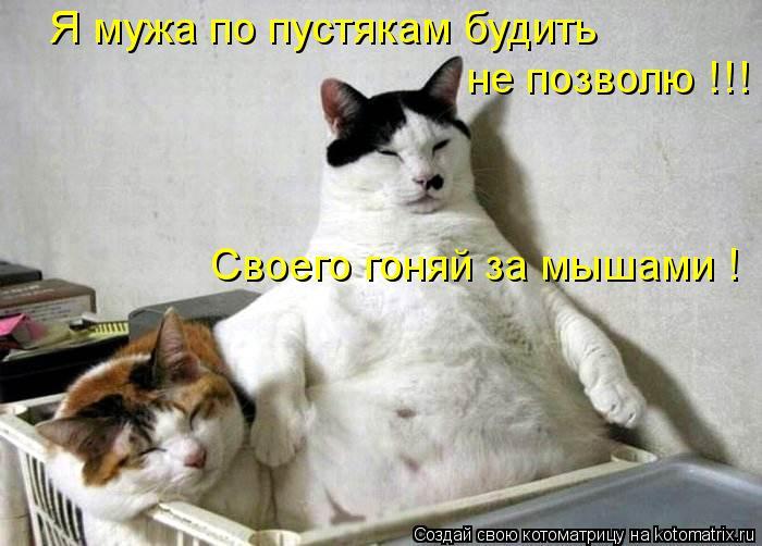 Котоматрица: Я мужа по пустякам будить  не позволю !!! Своего гоняй за мышами !