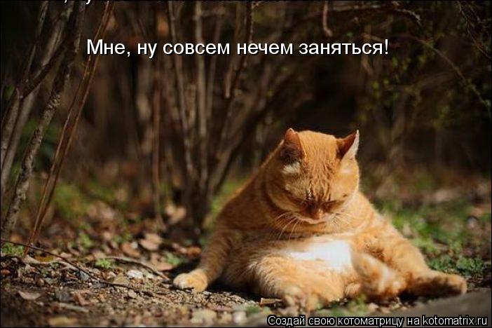 Котоматрица: Мне, ну совсем нечем заняться Мне, ну совсем нечем заняться!