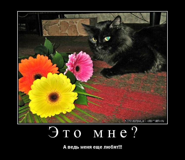 Котоматрица: Это мне? А ведь меня еще любят!!!