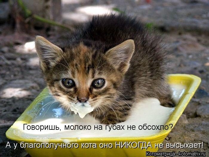 Котоматрица: Говоришь, молоко на губах не обсохло? А у благополучного кота оно НИКОГДА не высыхает!