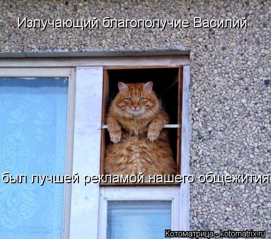 Котоматрица: Излучающий благополучие Василий был лучшей рекламой нашего общежития!