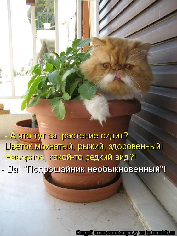 """Котоматрица: - А что тут за  растение сидит? Цветок мохнатый, рыжий, здоровенный! Наверное, какой-то редкий вид?! - Да! """"Попрошайник необыкновенный""""!"""