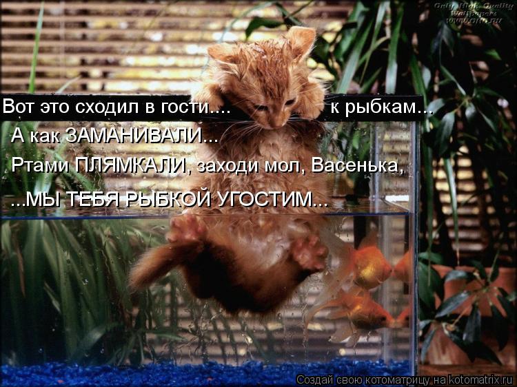 Котоматрица: Вот это сходил в гости....                  к рыбкам... ...МЫ ТЕБЯ РЫБКОЙ УГОСТИМ... А как ЗАМАНИВАЛИ... Ртами ПЛЯМКАЛИ, заходи мол, Васенька,
