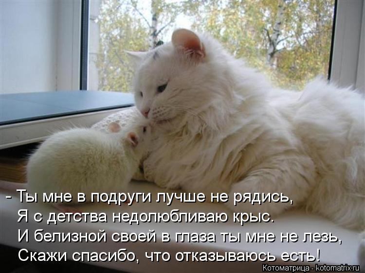 Котоматрица: - Ты мне в подруги лучше не рядись, Я с детства недолюбливаю крыс. И белизной своей в глаза ты мне не лезь, Скажи спасибо, что отказываюсь есть