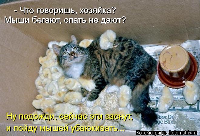 Котоматрица: - Что говоришь, хозяйка? Мыши бегают, спать не дают? Ну подожди, сейчас эти заснут,  и пойду мышей убаюкивать...