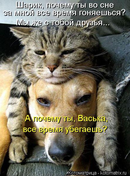 Котоматрица: Шарик, почему ты во сне за мной все время гоняешься? Мы же с тобой друзья... А почему ты, Васька, все время убегаешь?