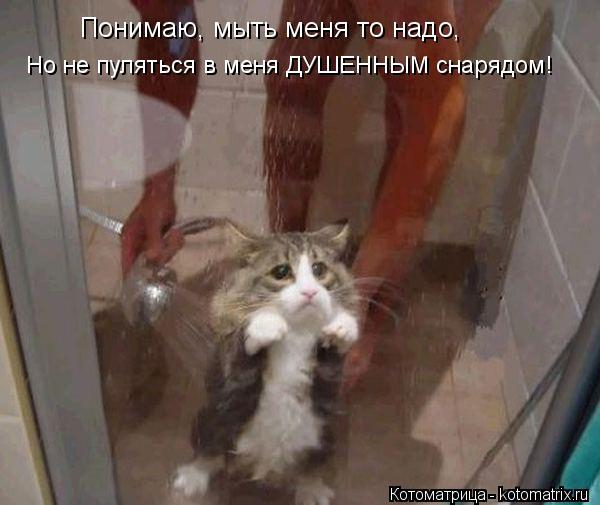 Котоматрица: Понимаю, мыть меня то надо, Но не пуляться в меня ДУШЕННЫМ снарядом!