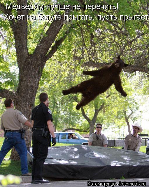 Котоматрица: Медведям лучше не перечить!  Хочет на батуте прыгать, пусть прыгает!