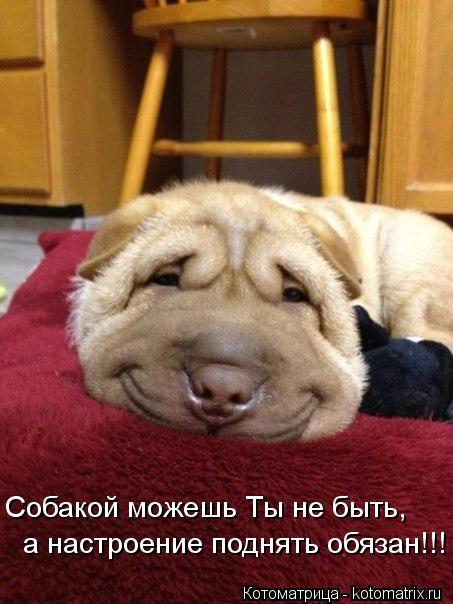 Котоматрица: Собакой можешь Ты не быть, а настроение поднять обязан!!!