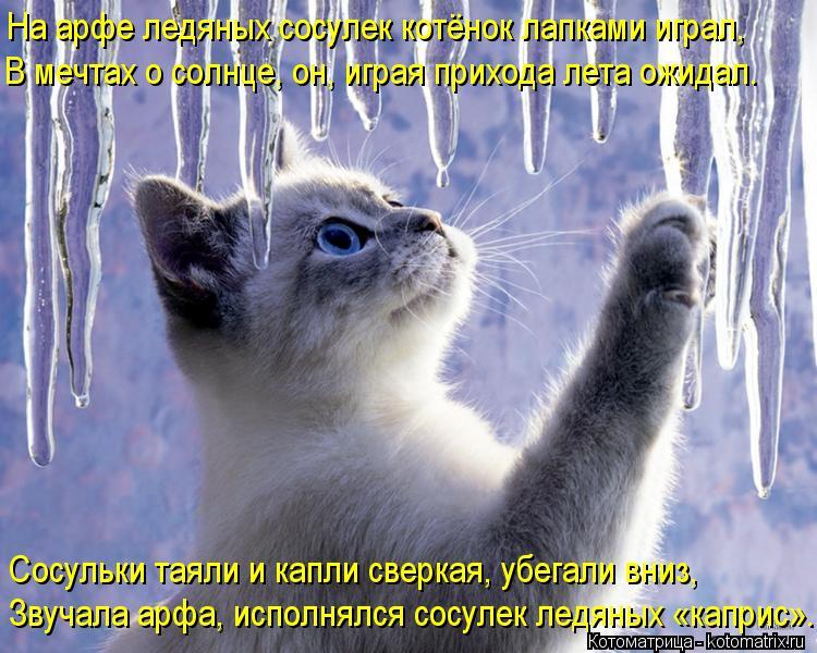 Котоматрица: На арфе ледяных сосулек котёнок лапками играл, В мечтах о солнце, он, играя прихода лета ожидал. Сосульки таяли и капли сверкая, убегали вниз