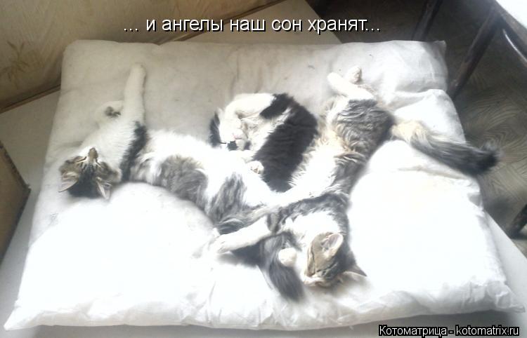 Котоматрица: ... и ангелы наш сон хранят...