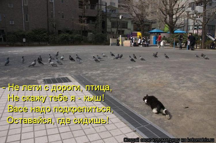 Котоматрица: - Не лети с дороги, птица, Не скажу тебе я - кыш! Васе надо подкрепиться, Оставайся, где сидишь!