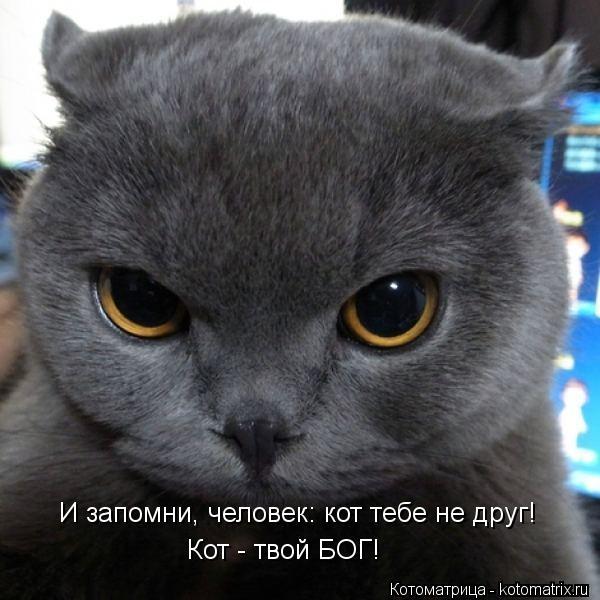 Котоматрица: И запомни, человек: кот тебе не друг! Кот - твой БОГ!