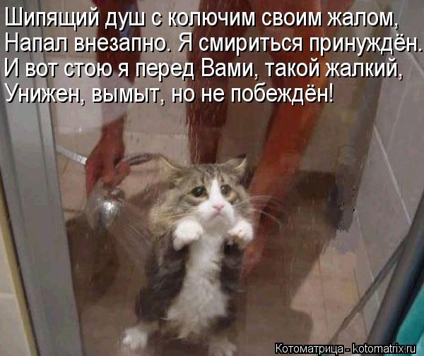Котоматрица: Шипящий душ c колючим своим жалом, Напал внезапно. Я смириться принуждён. И вот стою я перед Вами, такой жалкий, Унижен, вымыт, но не побеждён!