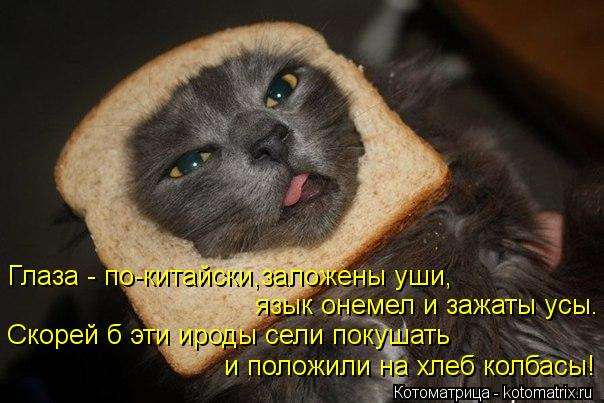 Котоматрица: Глаза - по-китайски,заложены уши, язык онемел и зажаты усы. Скорей б эти ироды сели покушать  и положили на хлеб колбасы!