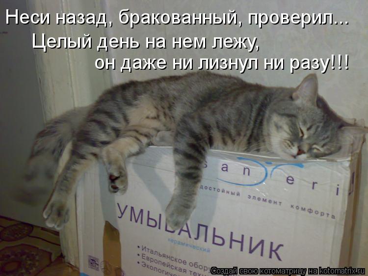Котоматрица: Неси назад, бракованный, проверил... Целый день на нем лежу, он даже ни лизнул ни разу!!!