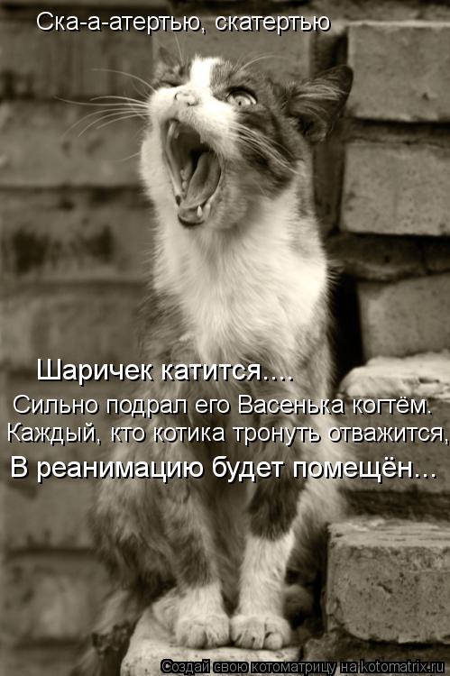 Котоматрица: Ска-а-атертью, скатертью Шаричек катится.... Сильно подрал его Васенька когтём. Каждый, кто котика тронуть отважится, В реанимацию будет поме