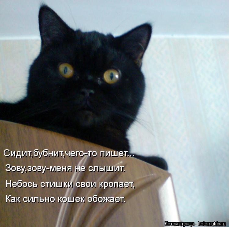 Котоматрица: Сидит,бубнит,чего-то пишет... Зову,зову-меня не слышит. Небось стишки свои кропает, Как сильно кошек обожает.