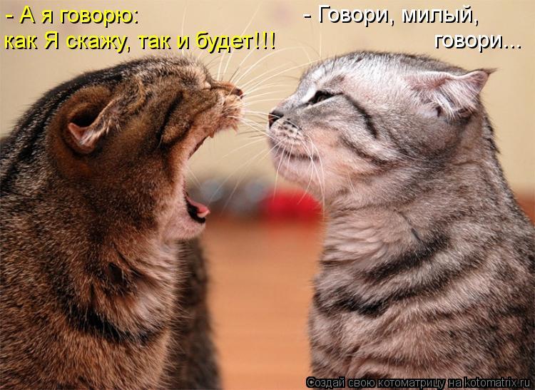 Котоматрица: - Говори, милый,  говори... - А я говорю: как Я скажу, так и будет!!!