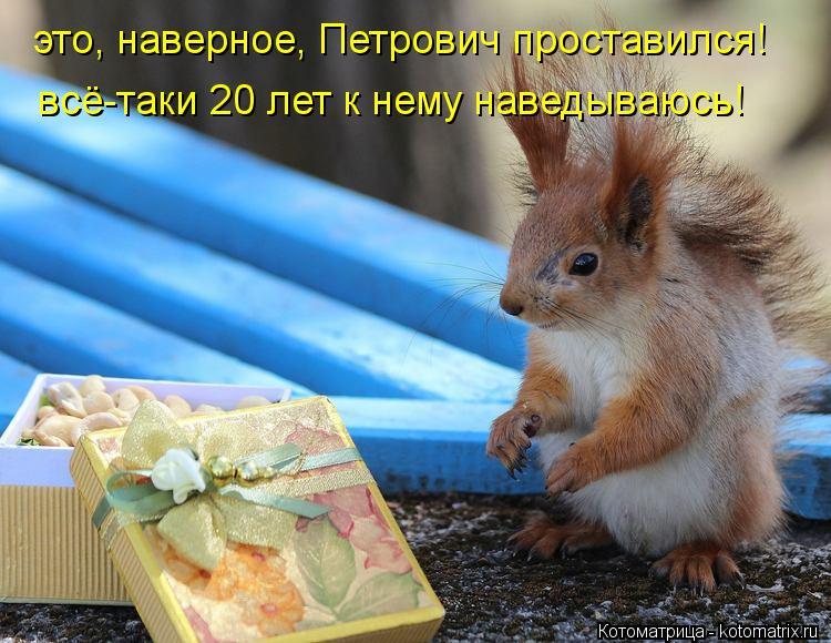 Котоматрица: это, наверное, Петрович проставился! всё-таки 20 лет к нему наведываюсь!