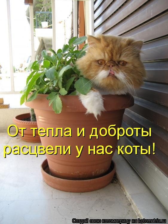 Котоматрица: От тепла и доброты расцвели у нас коты!