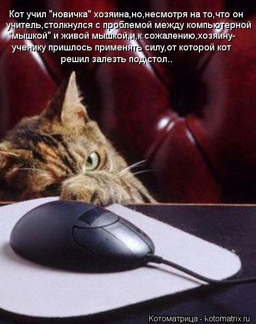 """Котоматрица: Кот учил """"новичка"""" хозяина,но,несмотря на то,что он учитель,столкнулся с проблемой между компьютерной """"мышкой"""" и живой мышкой,и,к сожалению,х"""