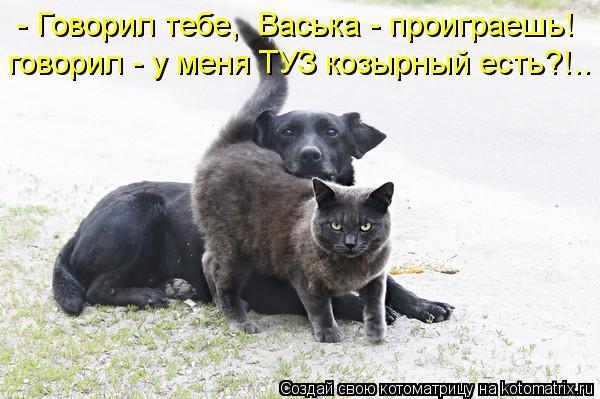 Котоматрица: - Говорил тебе,  Васька - проиграешь! говорил - у меня ТУЗ козырный есть?!..