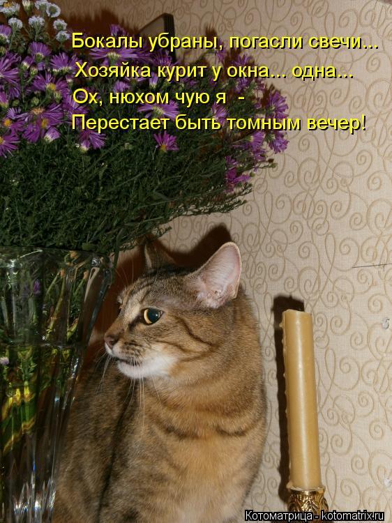 Котоматрица: Перестает быть томным вечер!  Бокалы убраны, погасли свечи...  Ох, нюхом чую я  -   Хозяйка курит у окна... одна...