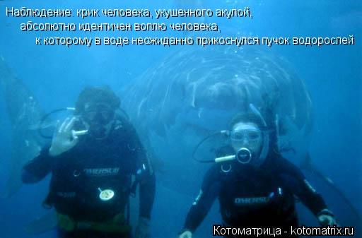 Котоматрица: Наблюдение: крик человека, укушенного акулой, абсолютно идентичен воплю человека, к которому в воде неожиданно прикоснулся пучок водоросл