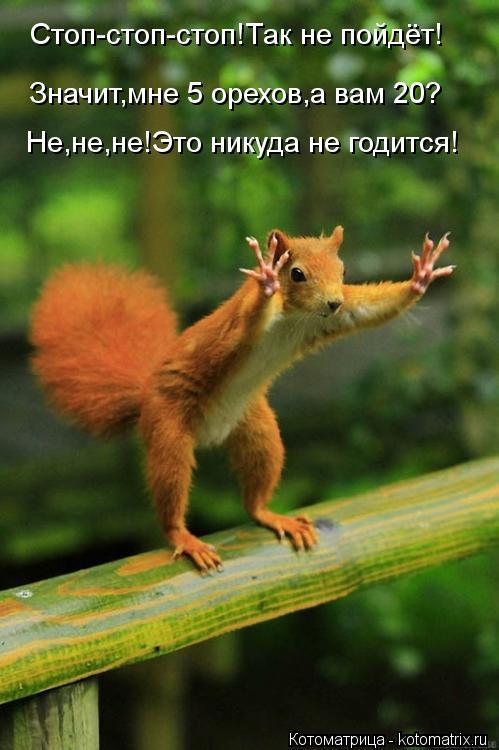 Котоматрица: Стоп-стоп-стоп!Так не пойдёт! Значит,мне 5 орехов,а вам 20? Не,не,не!Это никуда не годится!