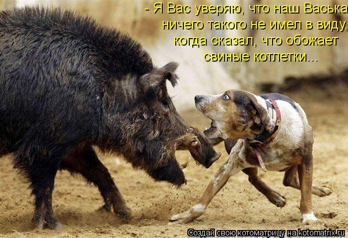 Котоматрица: - Я Вас уверяю, что наш Васька  ничего такого не имел в виду, когда сказал, что обожает свиные котлетки...