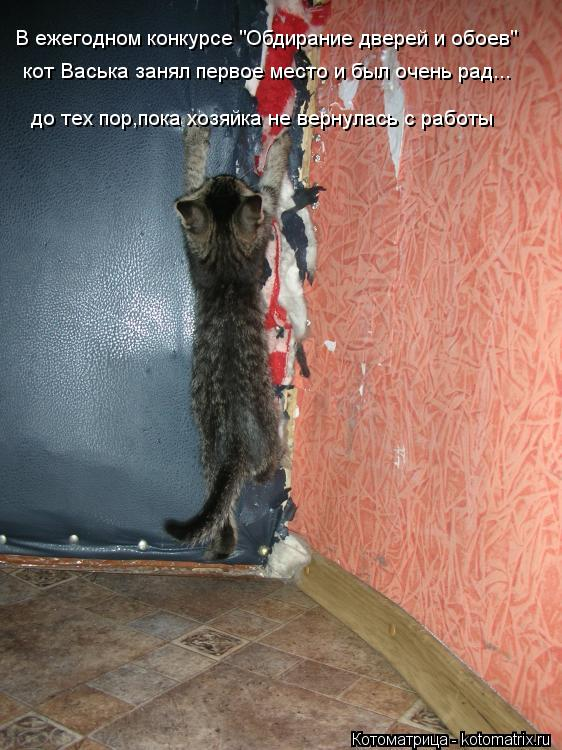 """Котоматрица: В ежегодном конкурсе """"Обдирание дверей и обоев"""" кот Васька занял первое место и был очень рад... до тех пор,пока хозяйка не вернулась с работы"""
