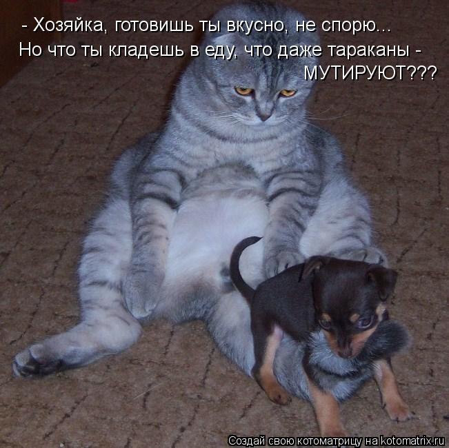 Котоматрица: - Хозяйка, готовишь ты вкусно, не спорю... Но что ты кладешь в еду, что даже тараканы -  МУТИРУЮТ???