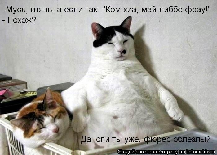 """Котоматрица: -Мусь, глянь, а если так: """"Ком хиа, май либбе фрау!"""" - Похож? - Да, спи ты уже, фюрер облезлый!"""