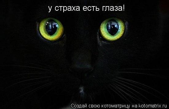 Котоматрица: у страха есть глаза!
